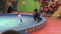 福建永鸿野生动物世界马戏表演1