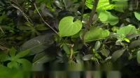 行星地球第8集热带雨林-cd1