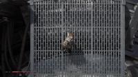 【老刘探长】《星球大战绝地:陨落的武士团》电影向全流程视频第6期