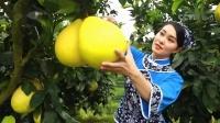 广东梅州柚广告 10s