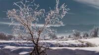 静静的冬天—2020年1月