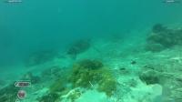 Derawan-Turtle Point