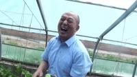 《农业蔬菜采摘》编辑制作沈达声