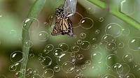 派大星当青虫是朋友,第二天找它玩,结果青虫变蝴蝶