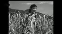 锦上添花1962插曲:谷地里有个胖大娘
