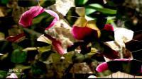 Indochine Tango印度支那探戈 - Jeff Steinberg(C Y无损试音版)