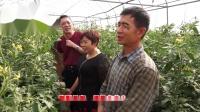 云南弥勒番茄用户周年用中草药杀菌剂,几乎不上白粉病,霜霉霉病,即便上病也很快防控住了.mp4