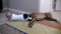 【时光】温顺的狗儿陪伴调皮的宝宝,父母在一旁傻笑,日子就是这么甜蜜!