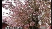 《千年阿胶》(1)20110617