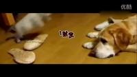 搞笑!猫狗的世记情仇