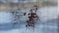 10种能在家里找到的可怕昆虫!(看完的都是汉子)