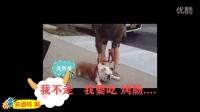 动物囧事 (1)史上最赖皮