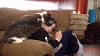 最搞笑的猫咪合集0.0