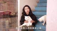 用有限的青春 救回150多条生命 谈救助流浪猫经历