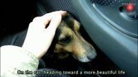 流浪狗遇到有家的狗狗总爱跟着, 终于有家了