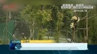 大学生微博发文手摸熊猫,遭爱护者批评持续发酵!
