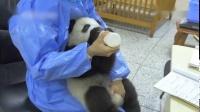 2019.07.14 大熊猫宝宝艾米要奶妈抱抱喝奶