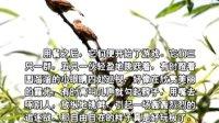 小学作文辅导视频04