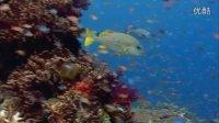 1080超清《海底世界》可做动态频保