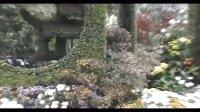 第二届杭州菊花艺术节