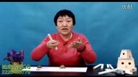 【艾灸疗法艾灸视频】单桂敏老师教您怎么鉴别艾条质量