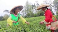 【拍客】湄潭县湄江核桃坝村民的别样生活