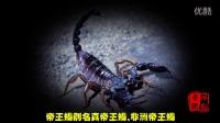 世界上最恐怖的5种动物,一不留神就毙命!【半岛Top榜】