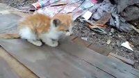 可怜的小猫咪❤它比女神珍贵7倍!