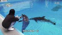 好戏在后台第九集 -- 海豚老友记(下集) (HD 1080)