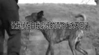 中国小子功夫震惊海外