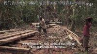 【森林解决方案】巴布亚新几内亚的生态林业9