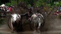 印尼巴东赛牛