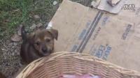 可怜的流浪狗与狗宝宝们