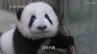 熊♥猫mv