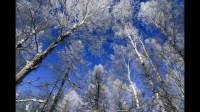 零下四十度的冷酷仙境——阿尔山跨年旅行