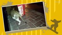 猫妈妈带着猫崽街头流浪*若无爱不必点击