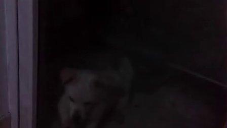 可怜的狗狗~