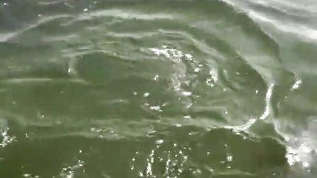 上海猎沪爆钓俱乐部-猎鹰再破米级海鲈18.3斤
