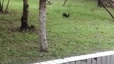 [大学生活]校园里的小松鼠