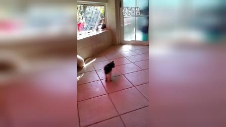 猫咪佐罗初次和姐姐哥哥们接触的可爱表现(视频3/3)
