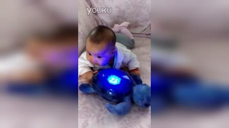 小核桃成长记_乌龟玩具 2014年09月19日15时34分