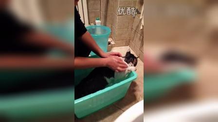 这只流浪猫咪,洗澡时真的很乖哦
