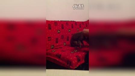 八蛋儿91527152的视频 2014-11-08 22:36