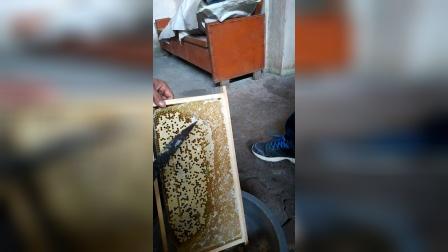 纯手工提取蜂蜜全过程VID_20141123_120814
