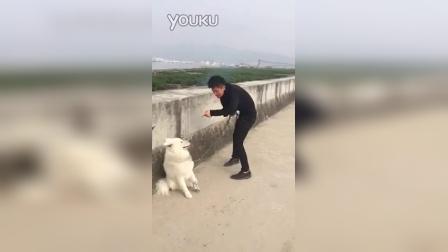 虐狗视频,没人性