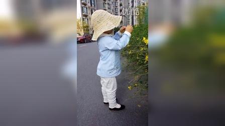 20150331 湾湾小心翼翼地抚摸迎春花