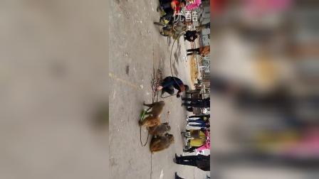 邳州街头的耍猴艺人