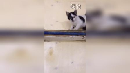 2015猫咪