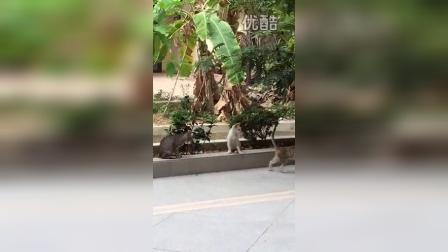 海南三亚房产投资王曦1898880069的视频 2015-05-02 18:11