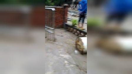 汉中市佛坪县彭家沟村洪涝灾害2